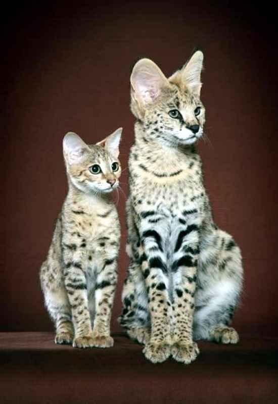фотографии разны пород кошек